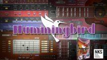 Hummingbird introduction